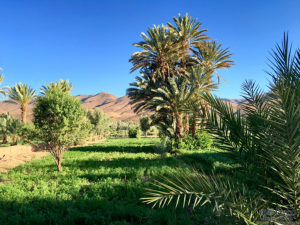 Agdz, Salt Caravan, Morocco