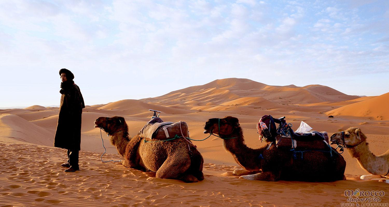 Camel Guide Desert